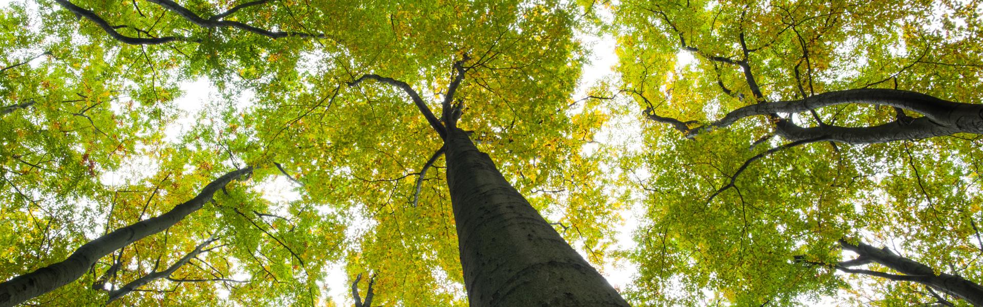 healthy-trees