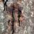 Tree Health: Acute Oak Decline (AOD)