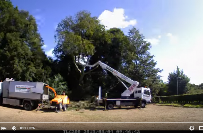 Project: Beech Tree Removal, Rushmere St Andrew
