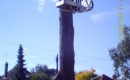 Bucklesham Road Tree Infection