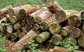 Logs habitat pile