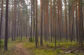 Tree trunks 3