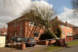 uprooted tree on house