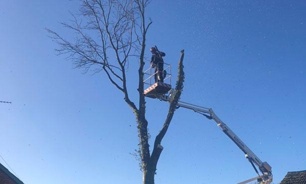 Tree-Surgeon-Dedham-Beech1
