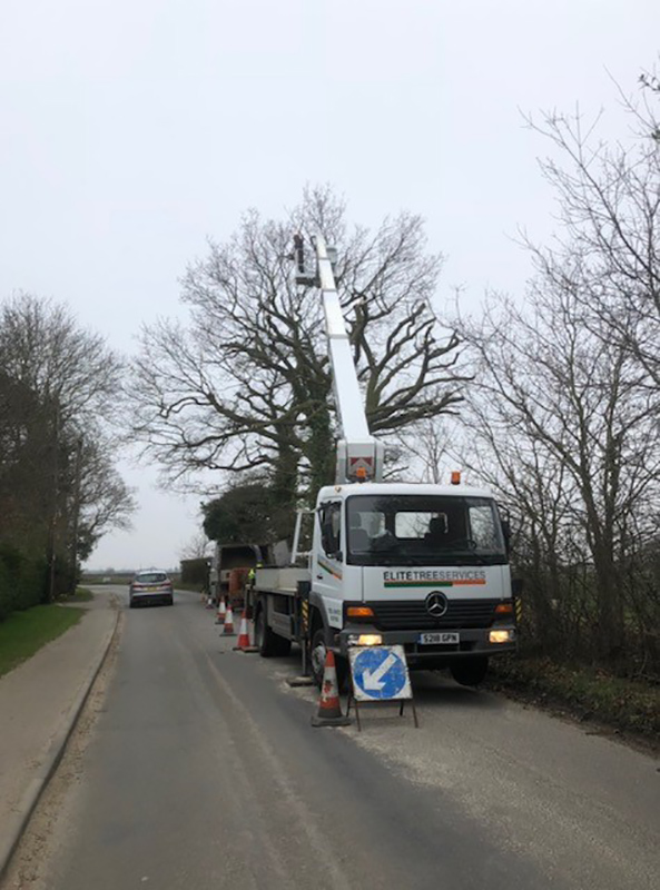 Kirton, Oak Tree Reduction 3