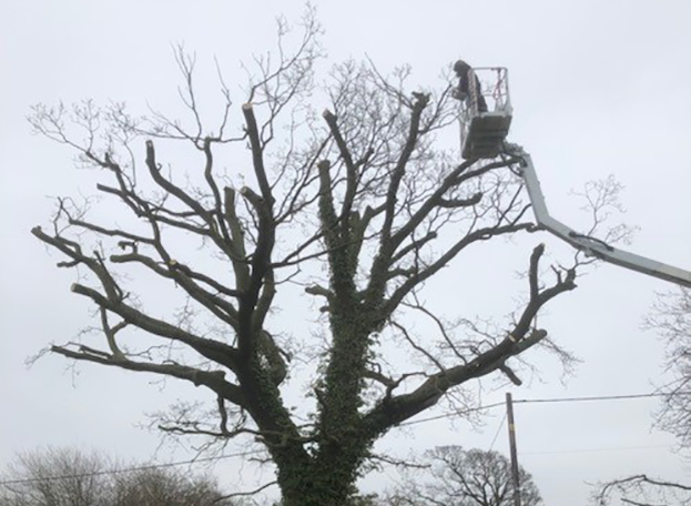 Kirton, Oak Tree Reduction LANDSCAPE