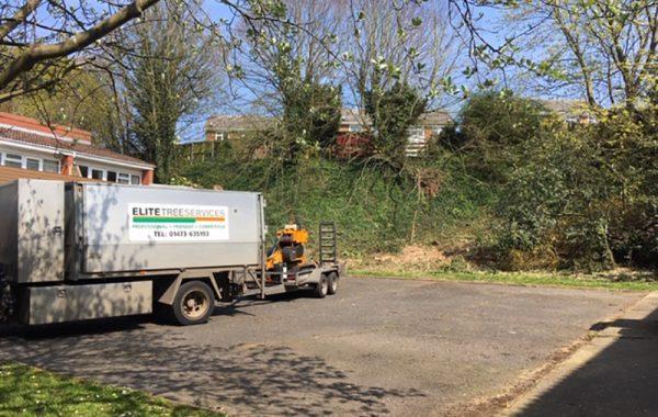 Stump grinding work in Ipswich, grinding multiple tree stumps
