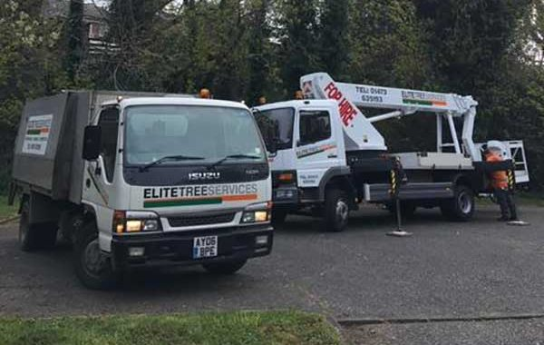 Tree pruning services in Ipswich, trimming and pruning of tall trees in a local car park