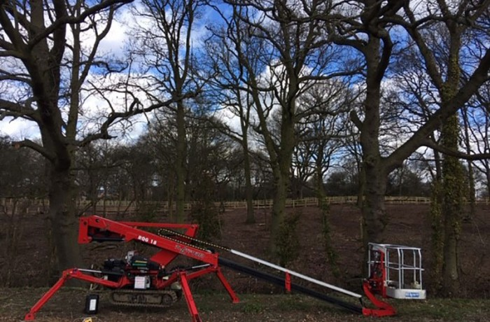 Tree Surgeon work on a development site in Colchester, removing large dead oak branches
