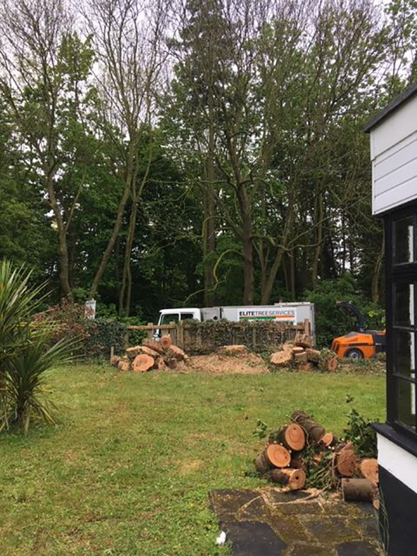 Ipswich Ash Dismantle After