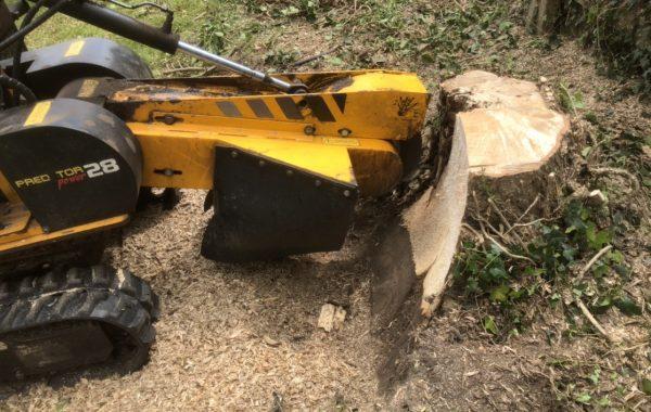 Tree surgery work in Ipswich, dismantling of an Oak tree