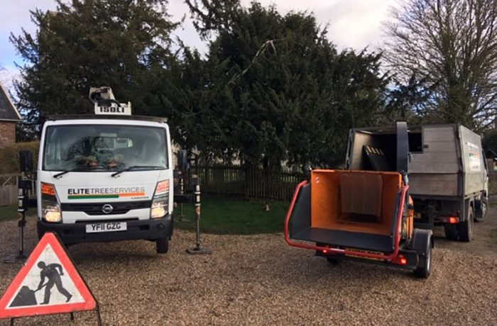 Tree Surgery services in Woodbridge, reduction and shaping of a Yew tree