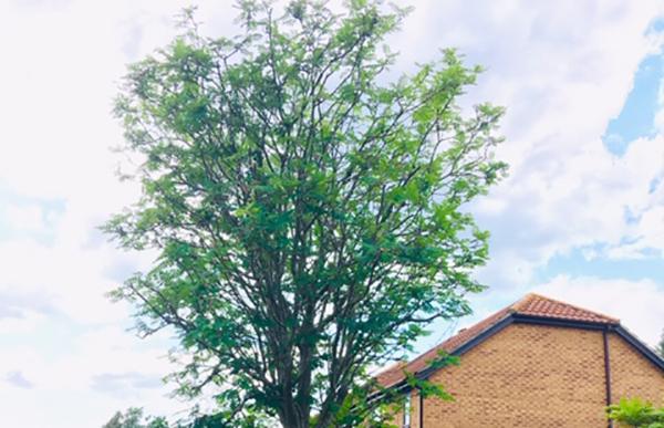 Kesgrave Reduce Tree After landscape