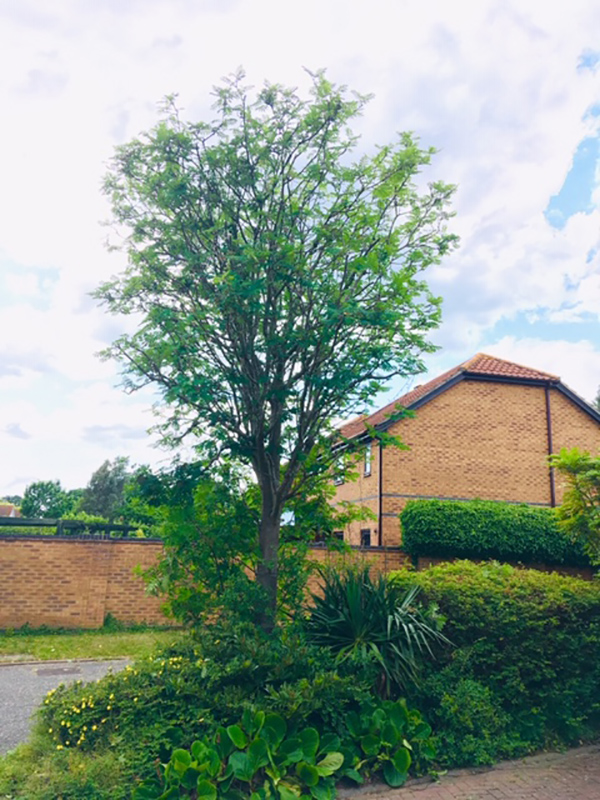 Kesgrave Reduce Tree After