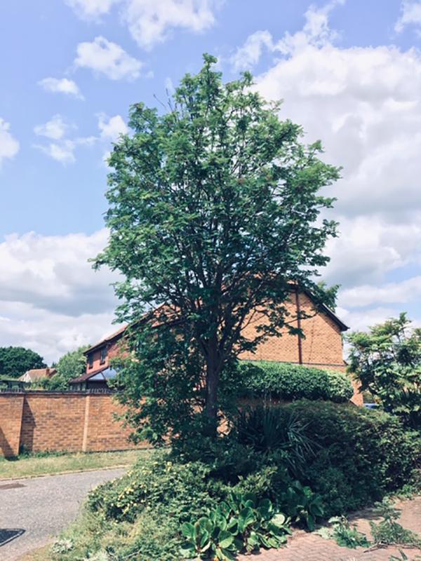 Kesgrave Reduce Tree Before