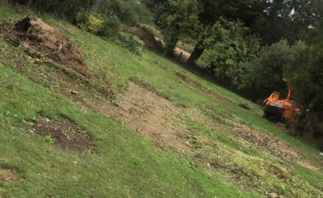 Ashboking Garden Clearance after