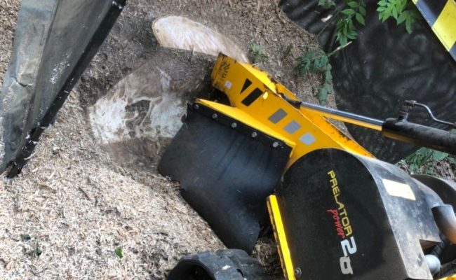 Ipswich Ash Removal stump grinding