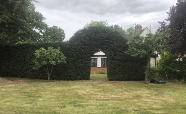 Rushmere Conifer Hedge after