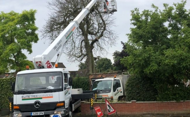 Dead Chestnut Removal Ipswich Before