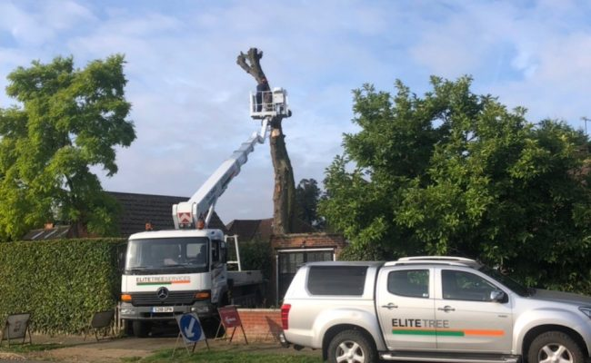Dead Chestnut Removal Ipswich During-hori