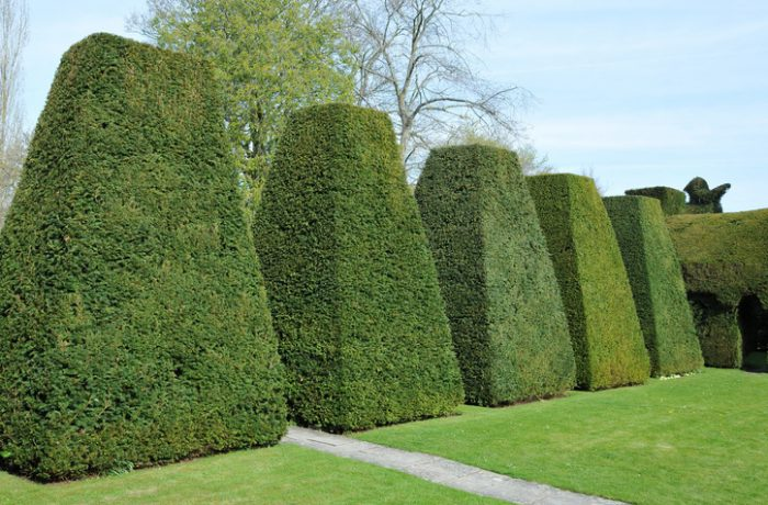Hedge trimming and topiary skills adopted in Ipswich