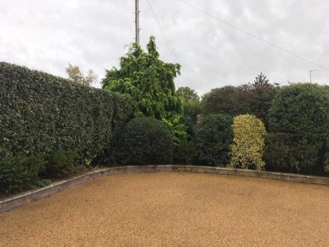 Bramford, Ipswich – Conifer Before