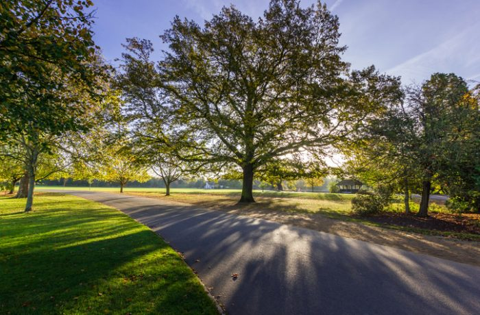 Park clearance to create a safe public space and environment in Suffolk