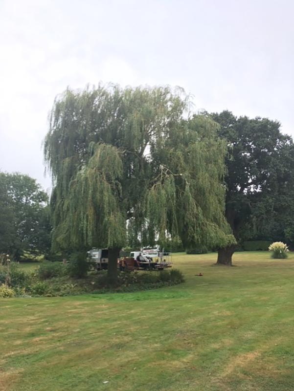 Waldringfield Willow After