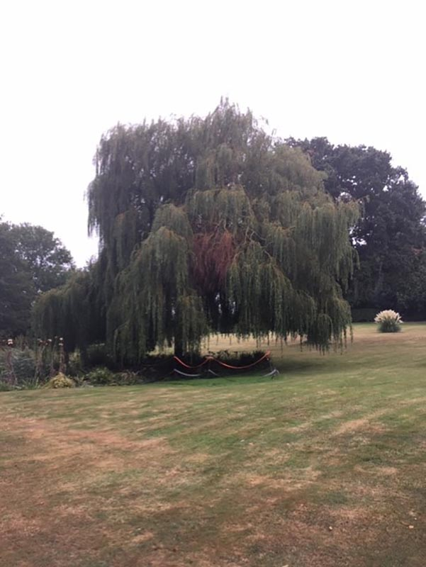 Waldringfield Willow Before