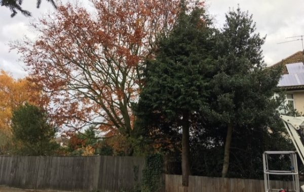 Ipswich trees overhanging a public footpath – addressing the legal clearance height