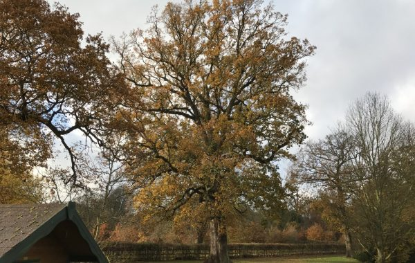 Aerial inspection highlights tree work to be done on this preservation protected Oak