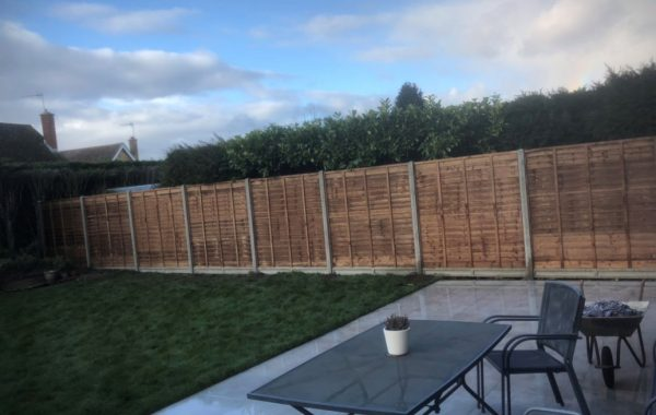 Ipswich hedge trimming and renewal of a garden fence