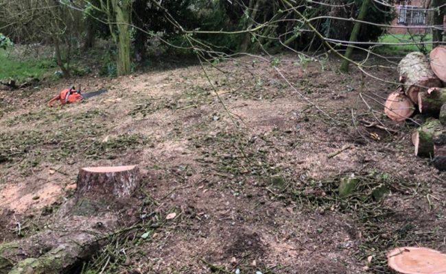Framlingham Cedars 2 landscape