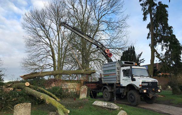 Churchyard clearance of precarious tree