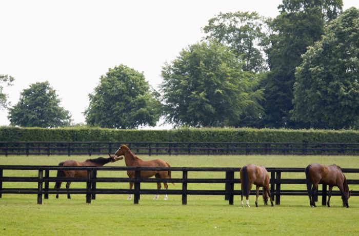 Suffolk based equestrian facility gets a brand-new post and rail fence