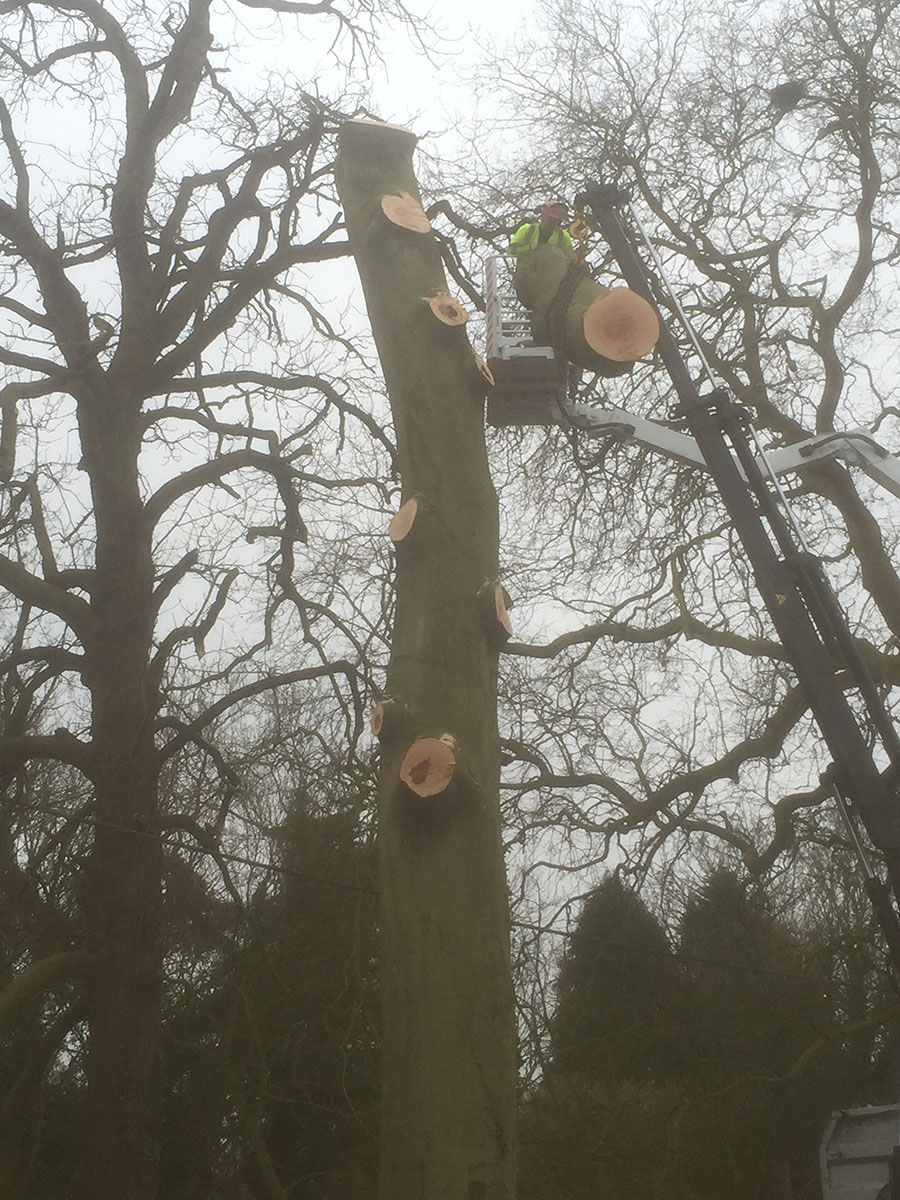 10-Dunmow-Road-early-pm-Day-1-Craning-down-sections-IMG_0330