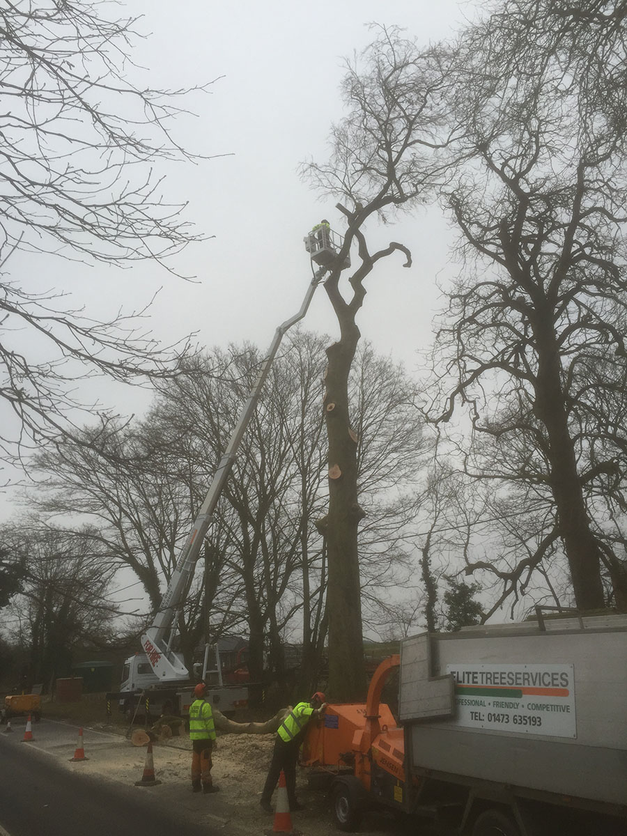5-Dunmow-Road-late-am-Day-1-Wumag-most-branches-off-IMG_0314