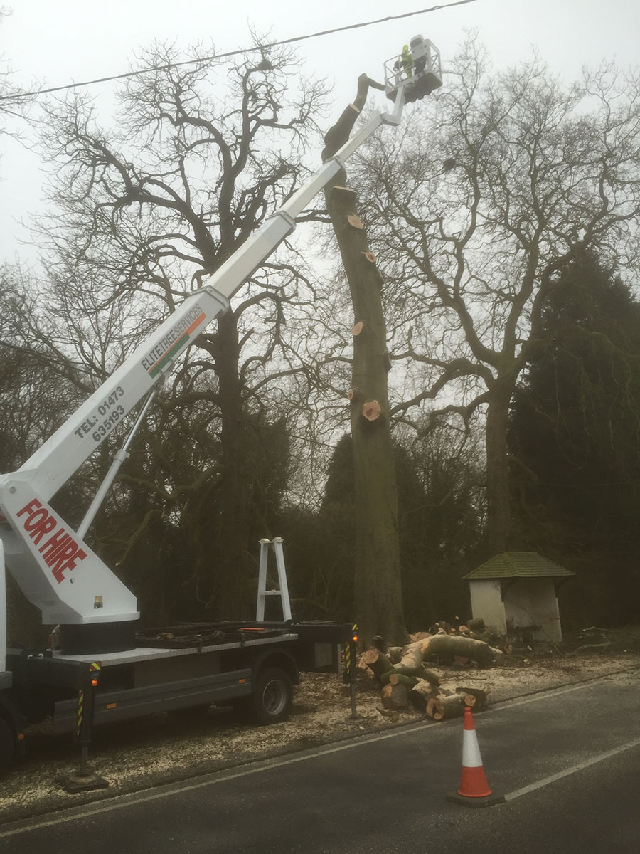 7-Dunmow-Road-late-am-day-1-trunk-removal-startingIMG_0324