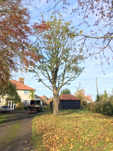 Chelmadiston-Sycamore-After