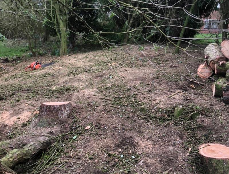 Framlingham-Cedars-2-landscape