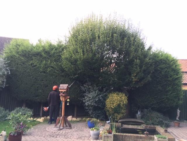 Hedge-Ipswich-During