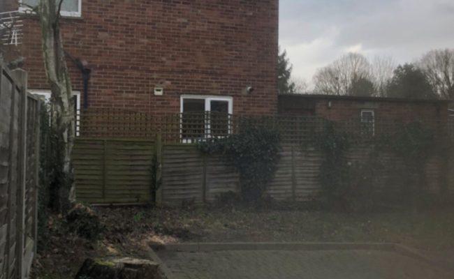 Ipswich-Birch-on-House-2-650x400
