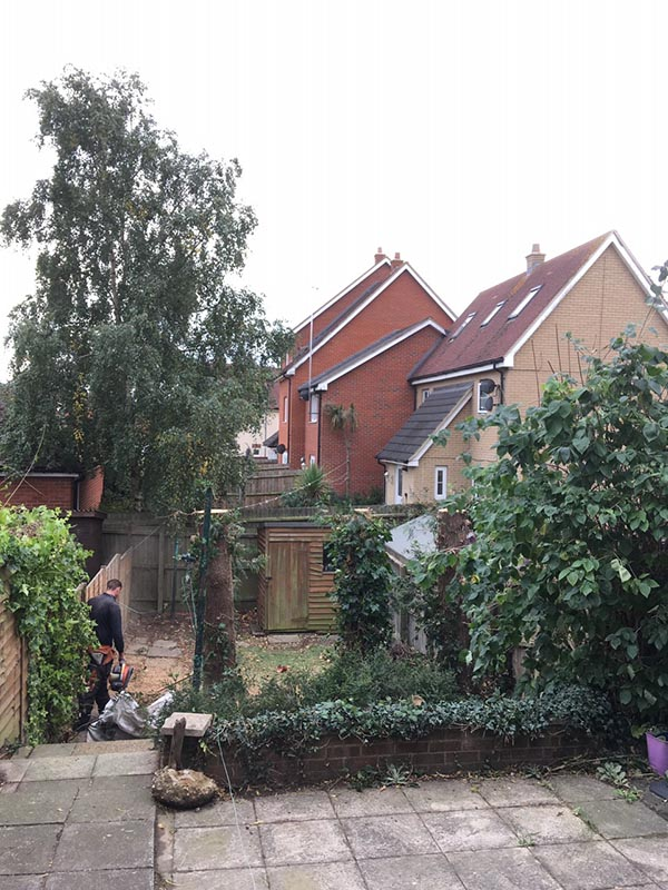 Ipswich-Conifers-After