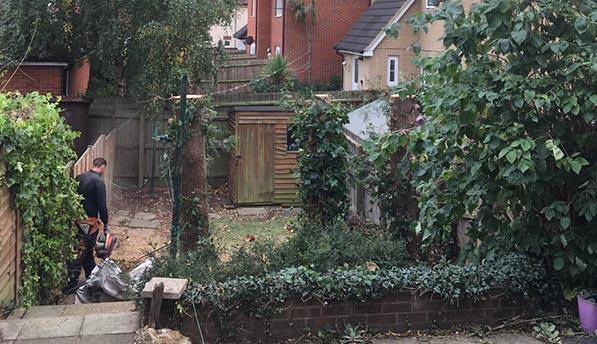 Ipswich-Conifers-After-landscape