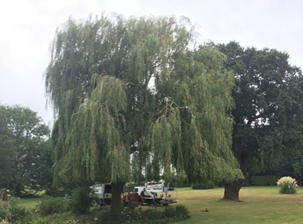 Waldringfield-Willow-landscape